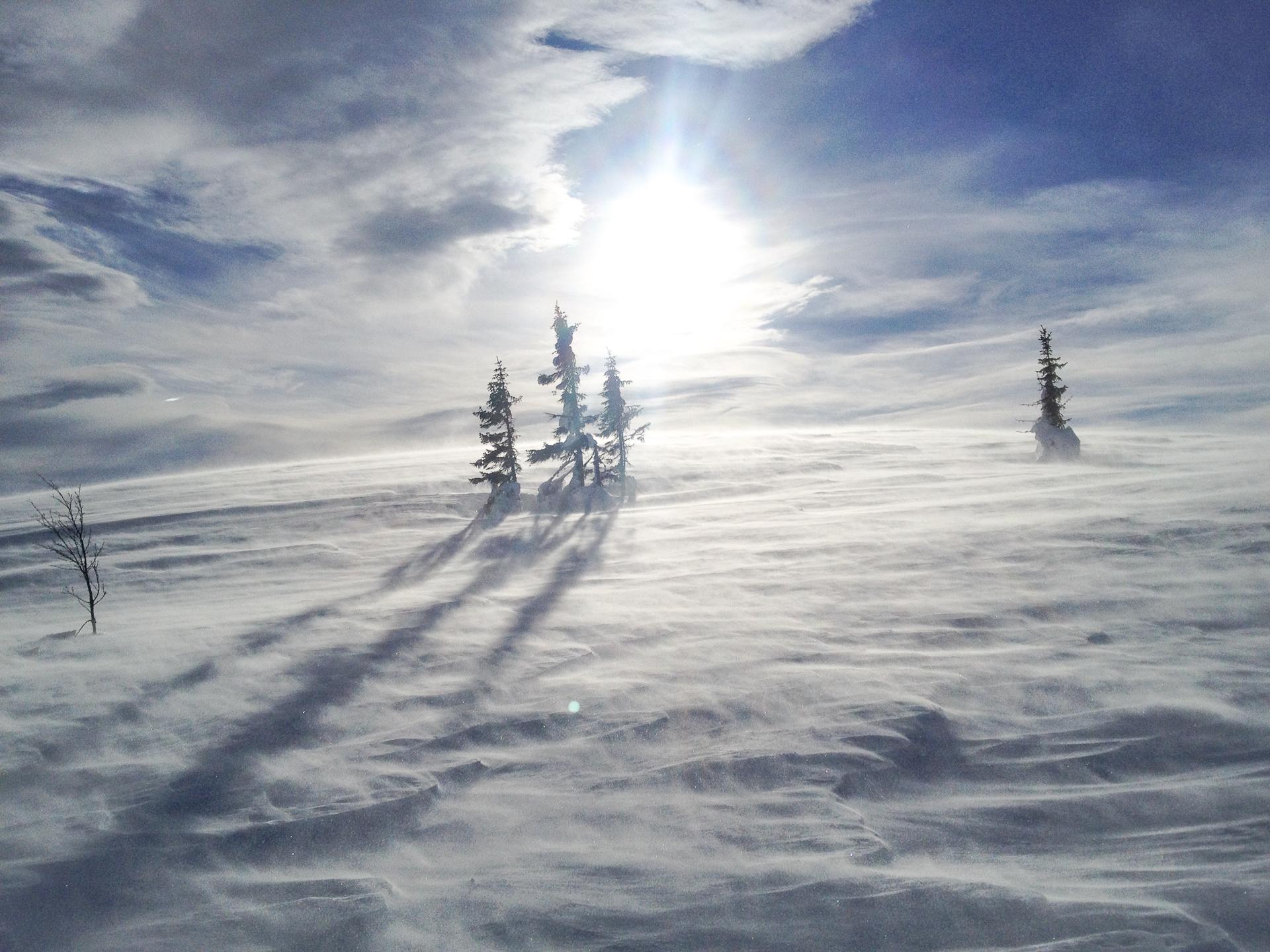 vinter2014.trugetur
